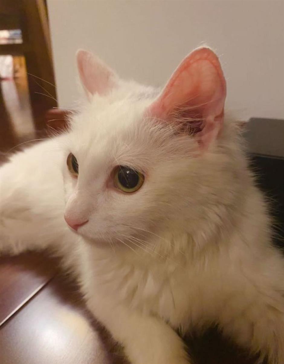 Tutu the Cat