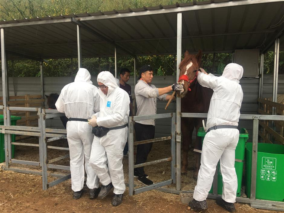 Advanced equine facilities being built for Asian Games