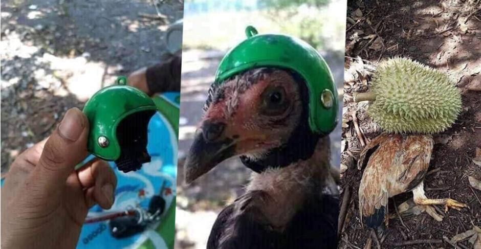 Taiwan 'Chicken Little' meets fate despite cute helmet