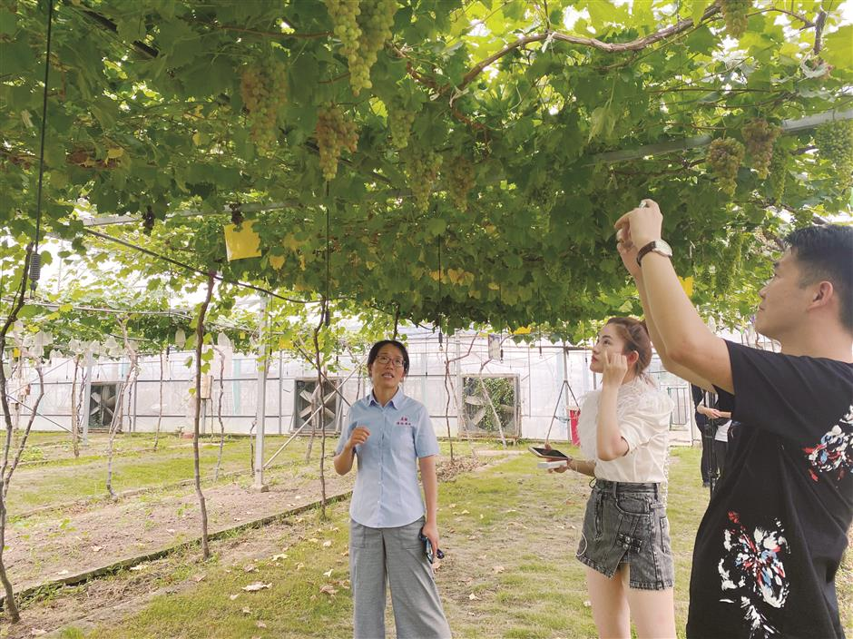 Hard work behind the scenes at grape park