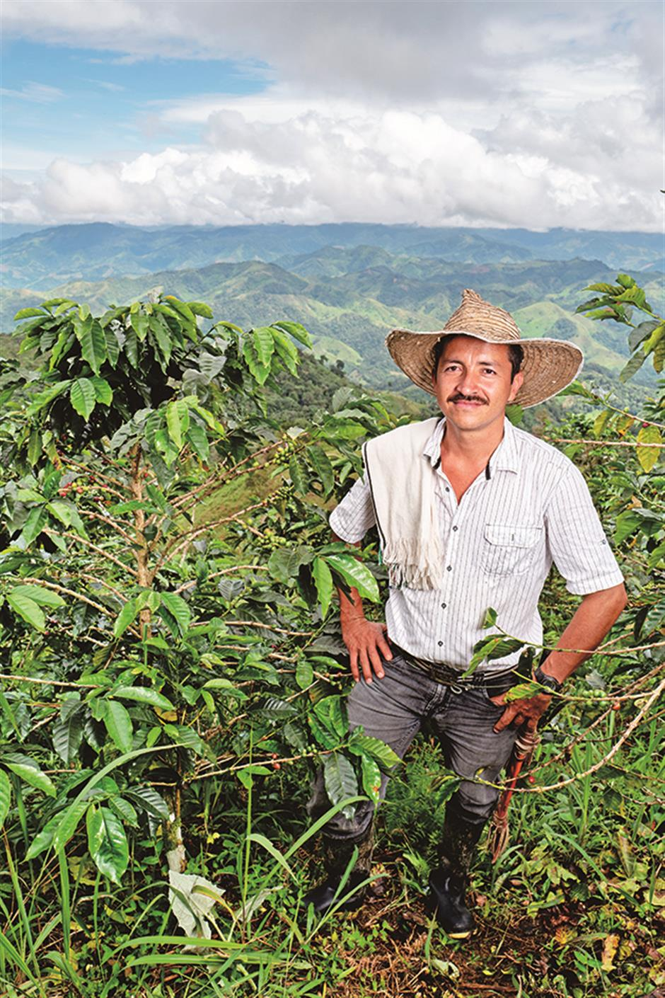 The coffee industry's sustainability drive