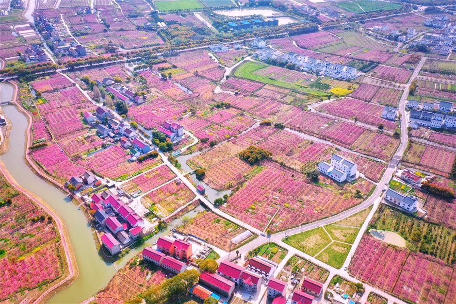 Fengxian village takes the lead in making countryside great again