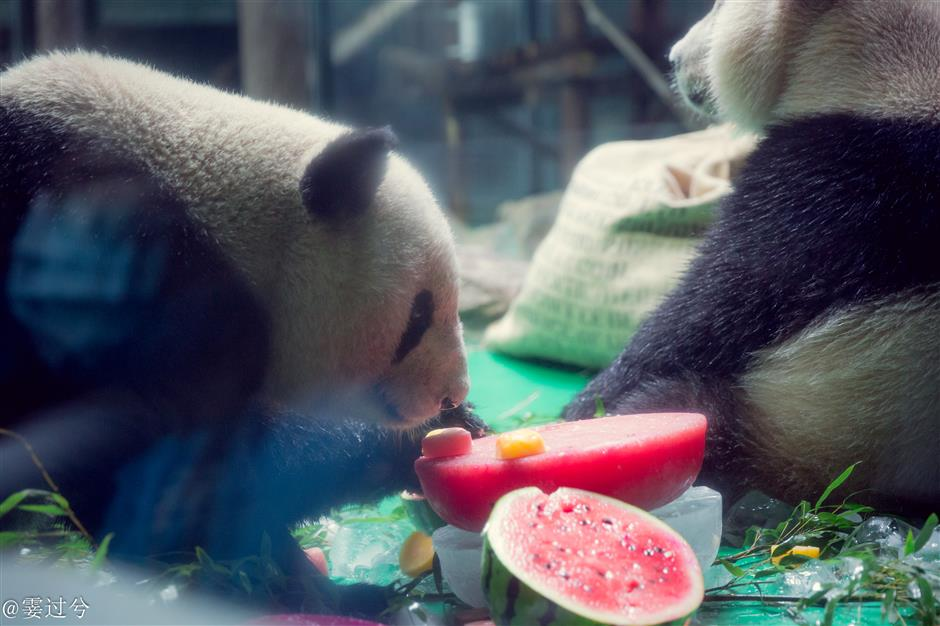 Shanghai Zoo puts on birthday treats for panda He Feng