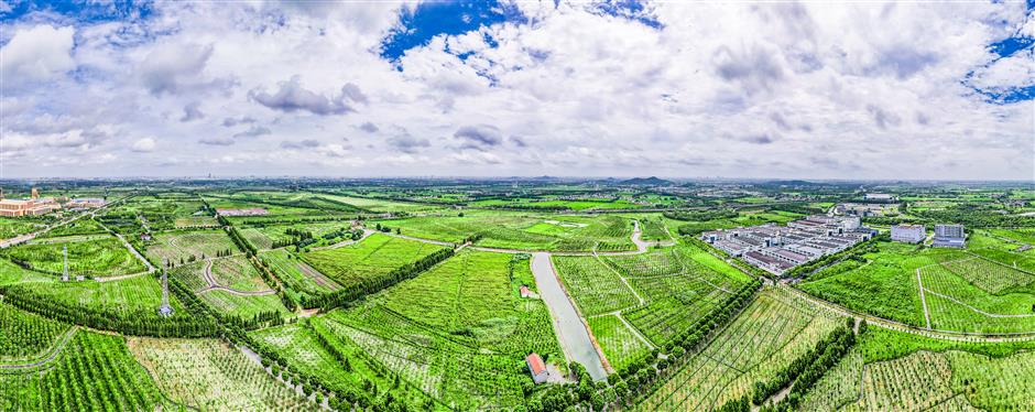Songjiangs forest project nears completion