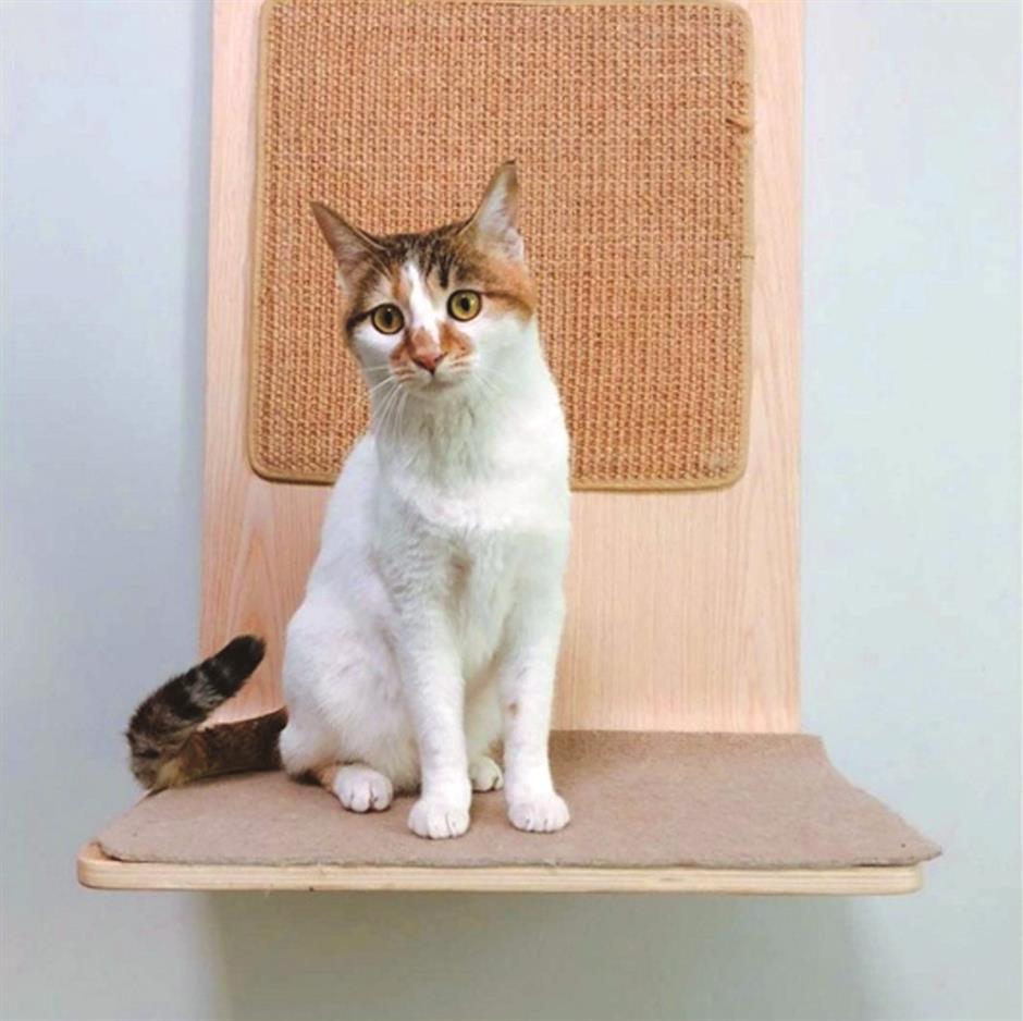 Animal adoption information as of September 6