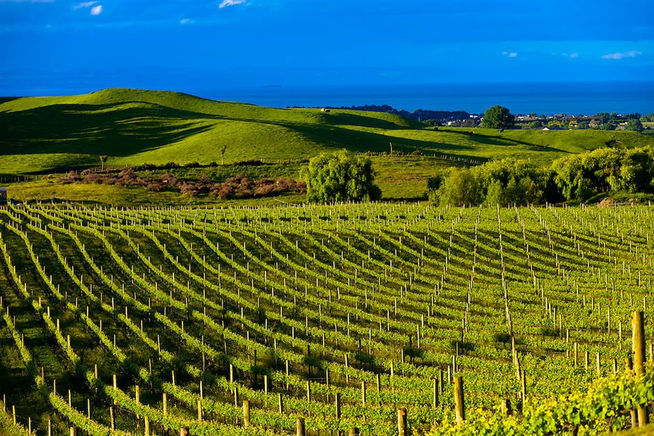 NZs oldest wine region perseveres in adversity