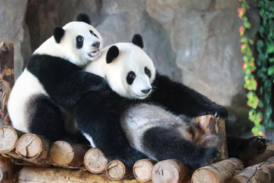 Panda cub awaits name from narrowed-down list