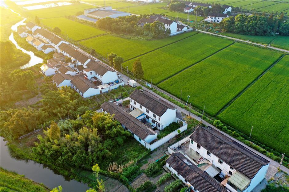 Rural revitalization for Fengxian farmers