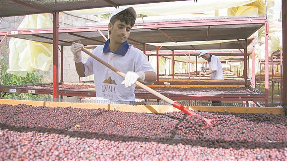 One mans coffee vision in war-torn Yemen