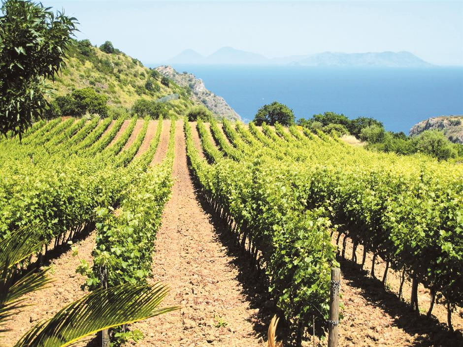 In the soup with Sicilian wine