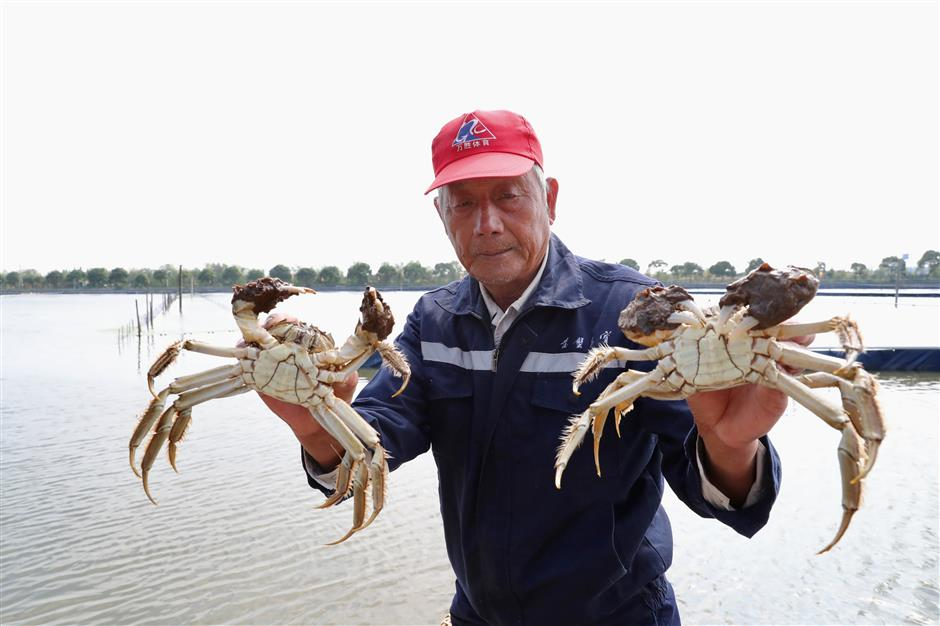 Crabs clawing their way up on green island