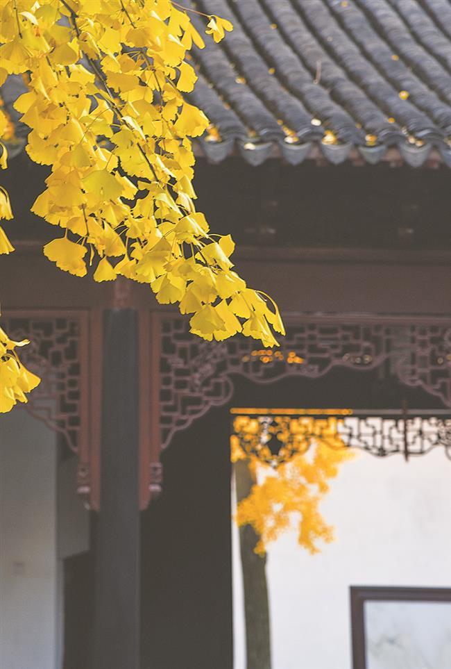 Suzhou: an autumn paradise where dreams come true
