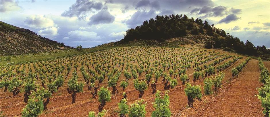 Spanish wine sweet on potatoes