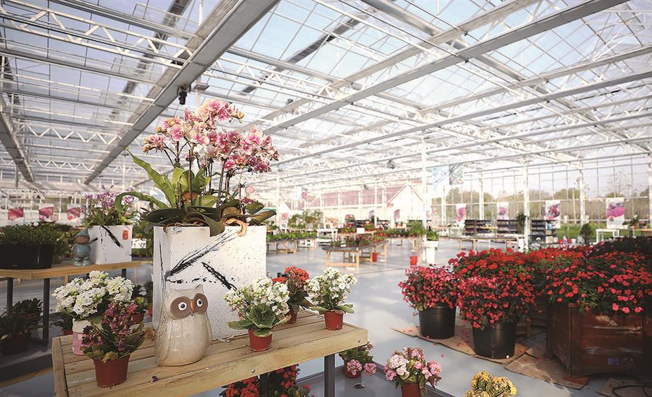 Chongming blossoming into floral mecca with 2021 expo