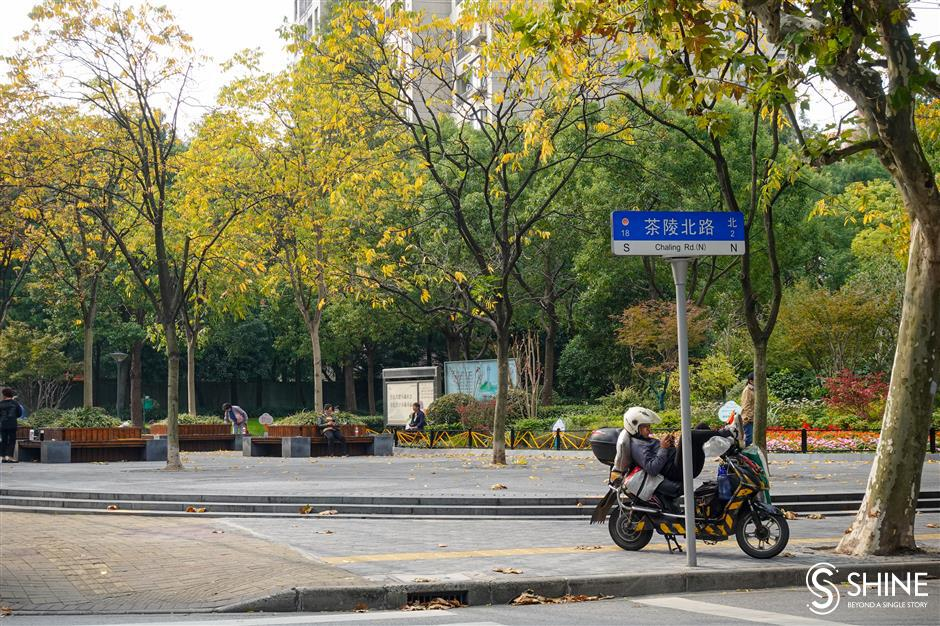 Autumn colors smile brightly on Shanghai