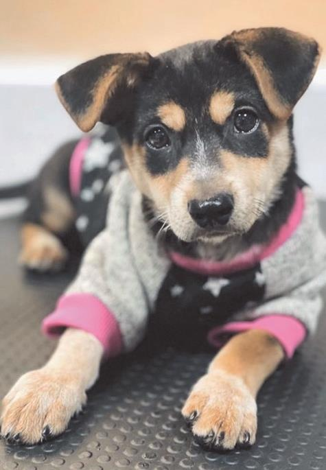 Animal adoption as of December 27