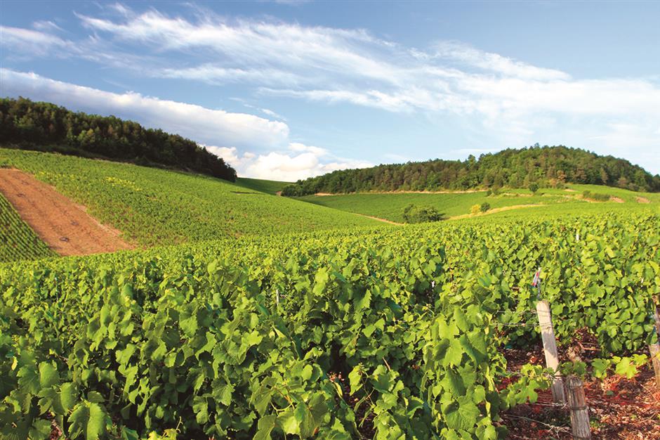 Winemakers lean toward purity