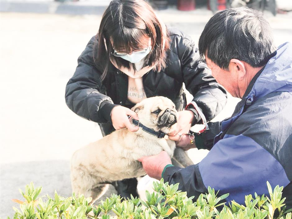 Village pets given rabies injections in Songjiang