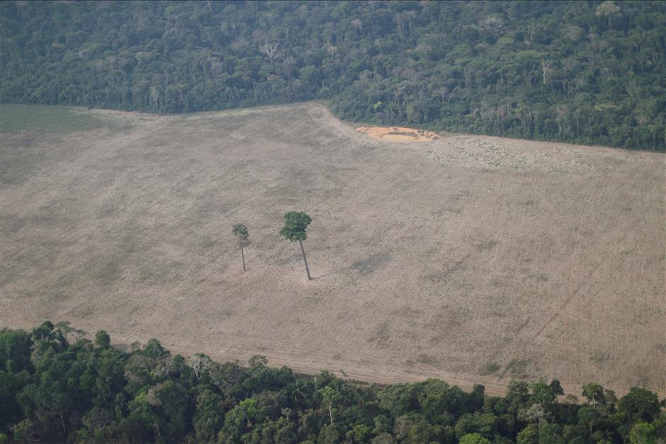 Major threat to global forests: just 29 hotspots