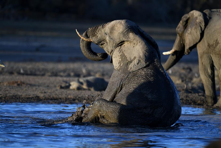 Counting elephants from space with new tech