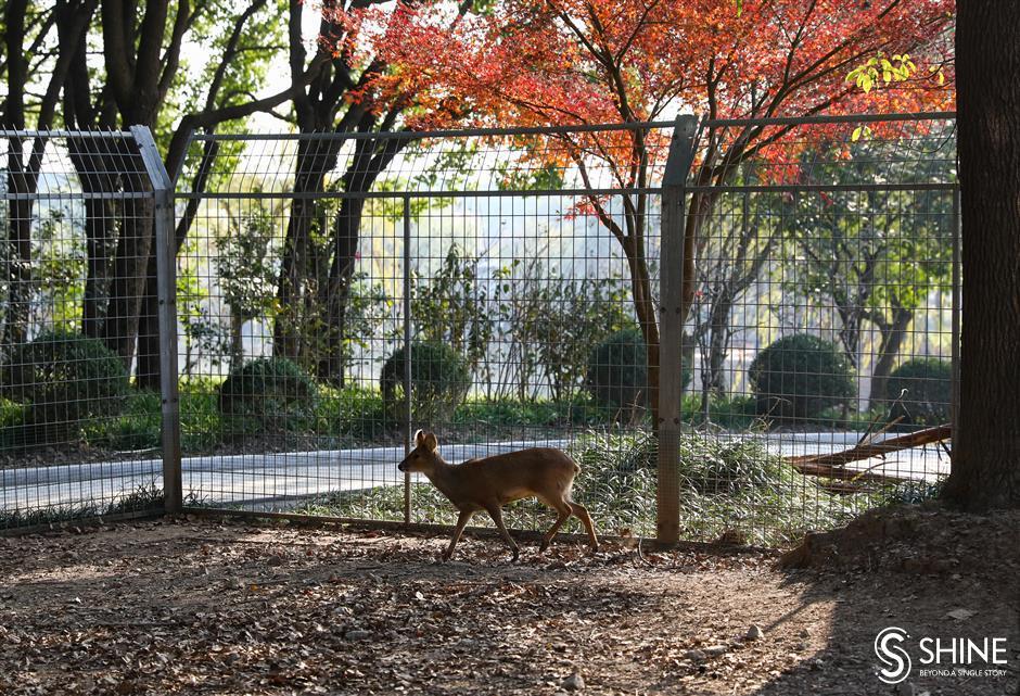 Rescuers provide protection for wild animals in Shanghai