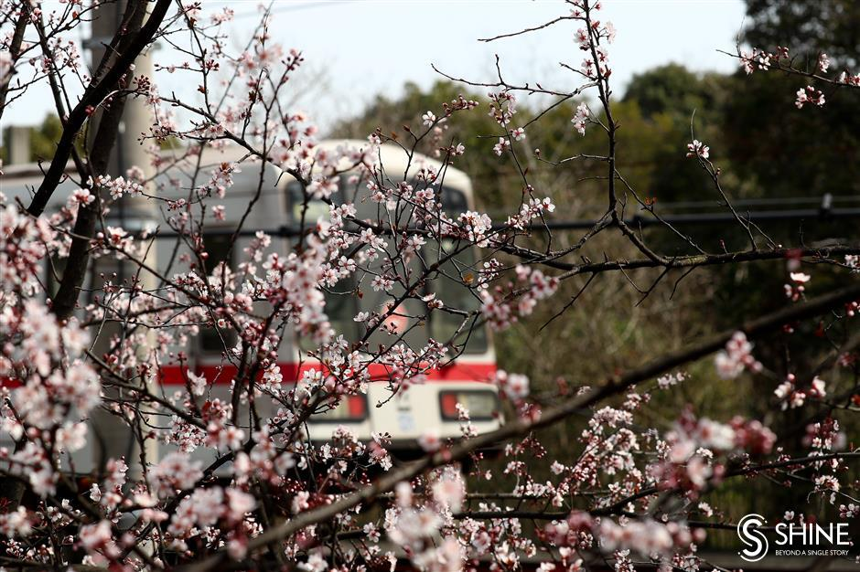Shanghai sees hottest late February day in 100 years