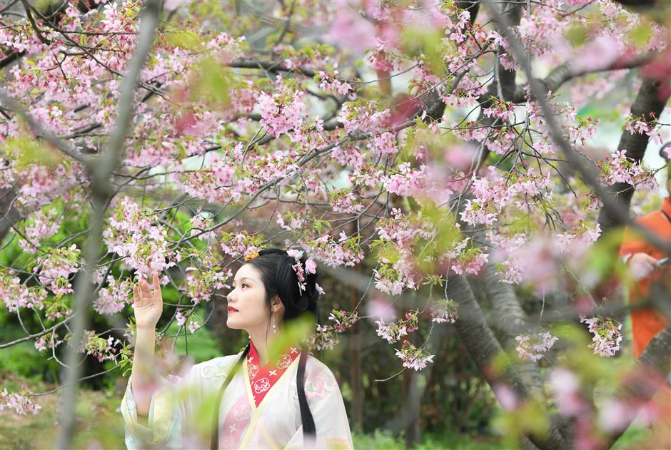 Hubei government invites medical workers to revisit Wuhan and enjoy cherry blossoms