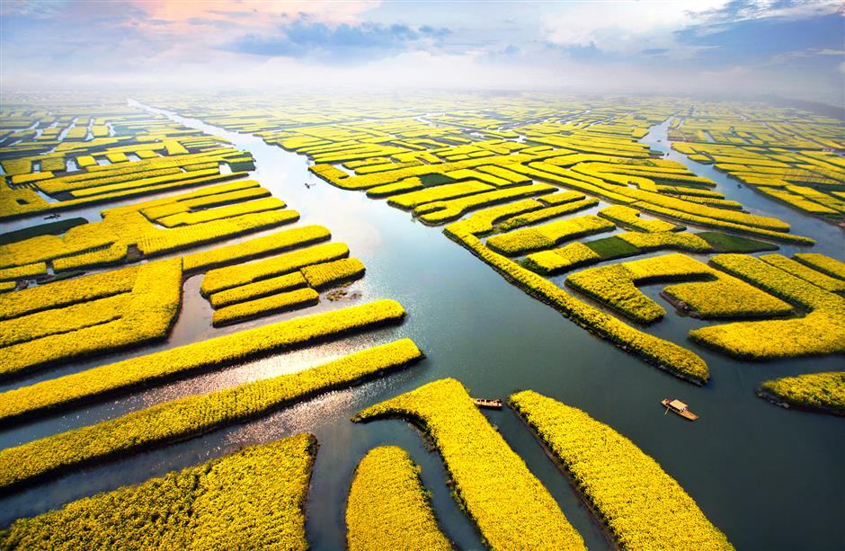 Flower festival set to blossom in Xinghua