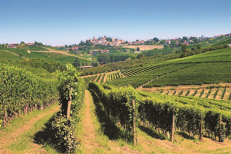 Unearthing Italian vino gems