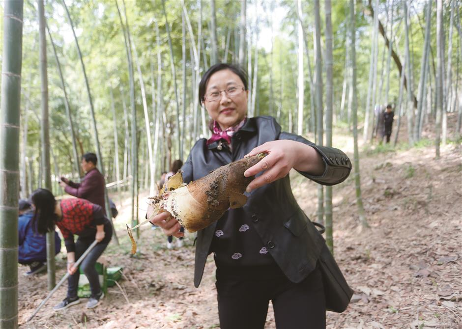 Sheshans bamboo shoots gala marks arrival of spring
