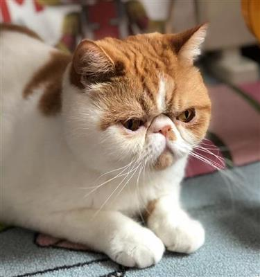 What?! Is buying a cat in Shanghai really that expensive?!