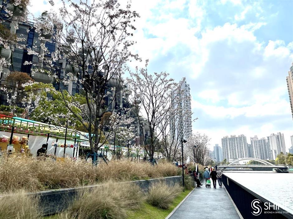 New path and market blossom along Suzhou Creek