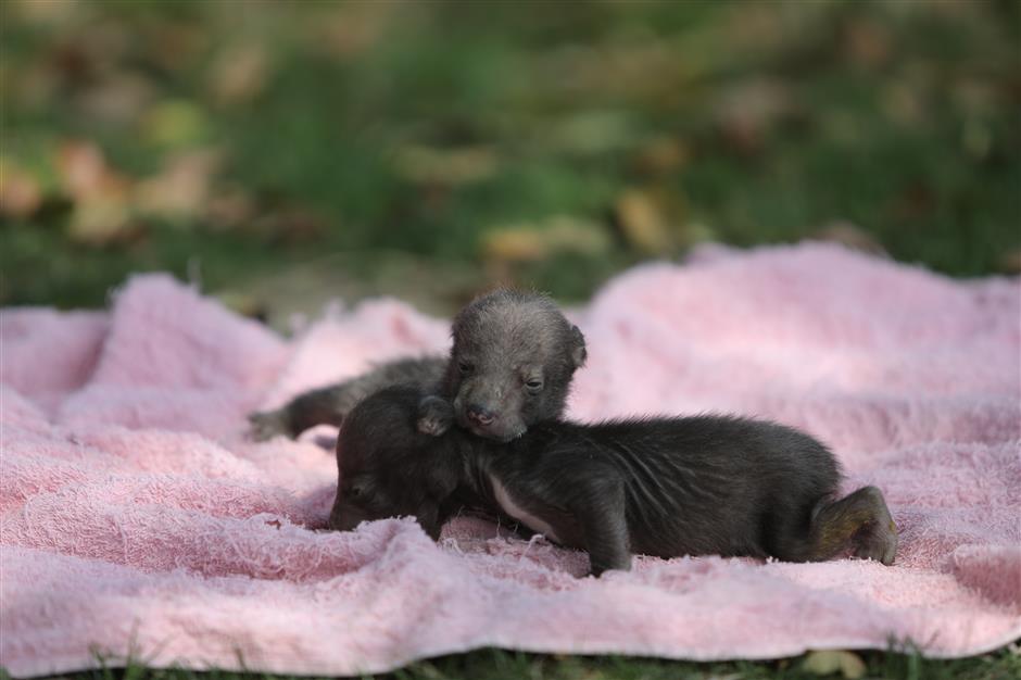 Park seeks names for wild animal newborns