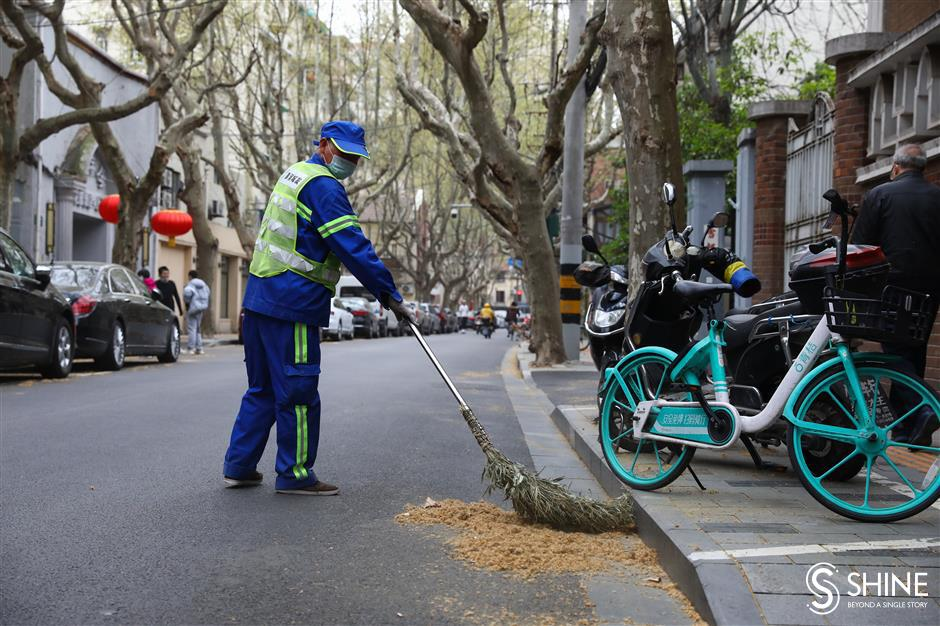 Catkin menace set to descend on Shanghai