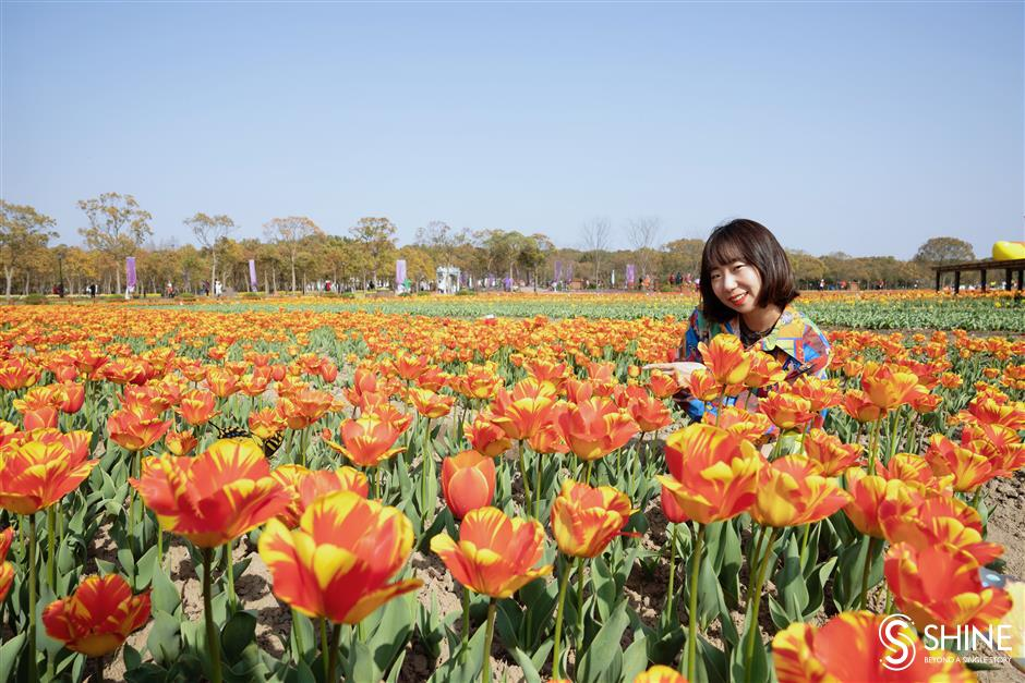 Chongming Island is ground zero for spring flowers
