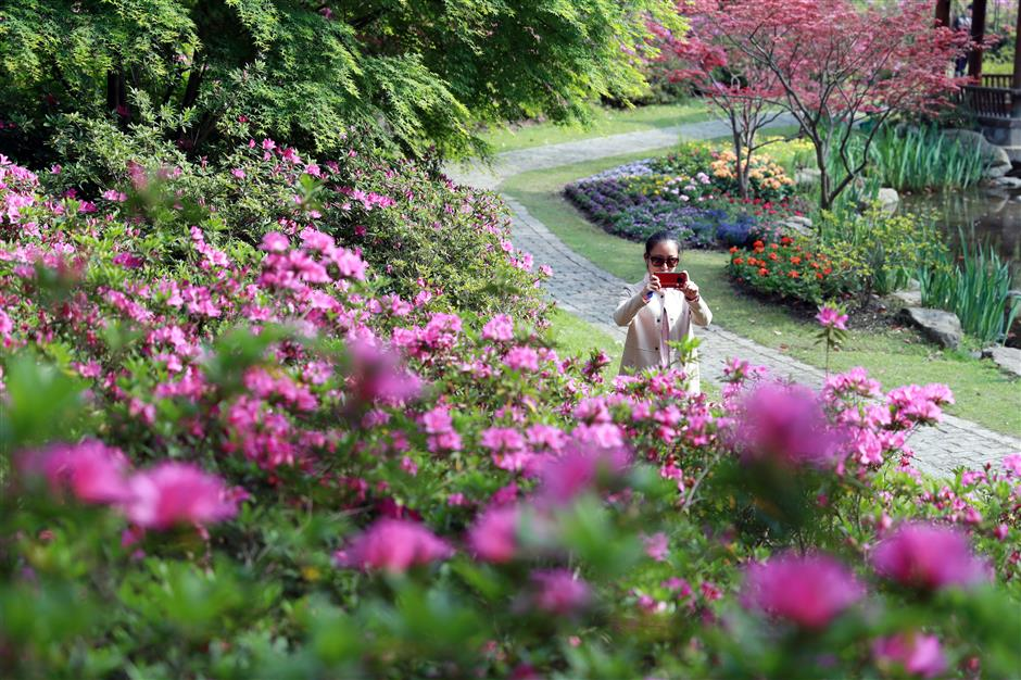 Azaleas putting on a show at forest park