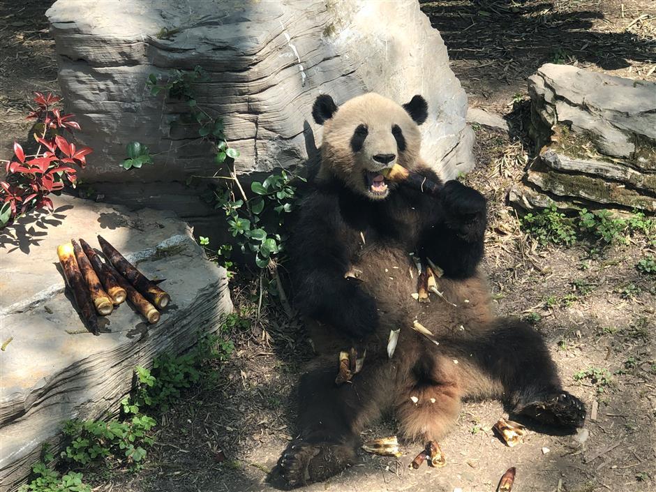 Zoo residents enjoying the spring weather
