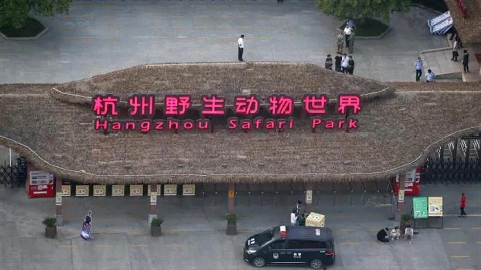 Trio of young leopards escape from Hangzhou Safari Park