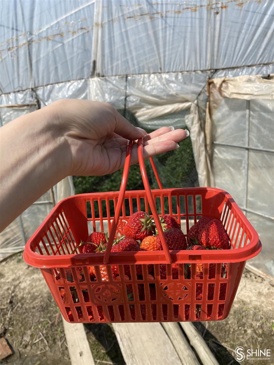 Exploring Chongming Islands culinary workshops