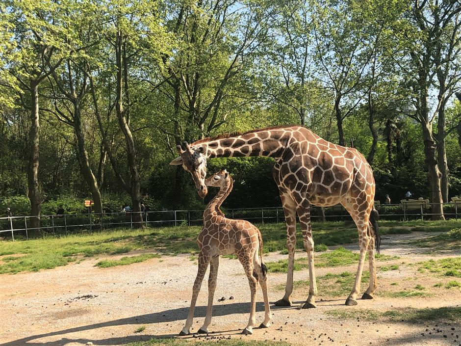 Cute pups, calves, and infants come out to play at zoo