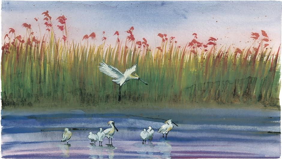 New book highlights the wetlands ecology of Shanghai