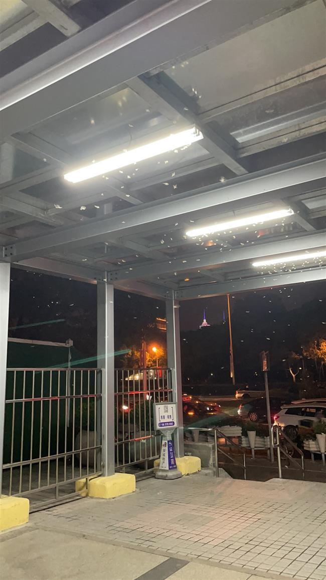 Annual termite wrath descends upon Shanghai