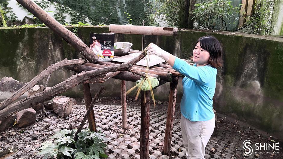 Zoo animals at top of food chain with <i>zongzi</i> treats