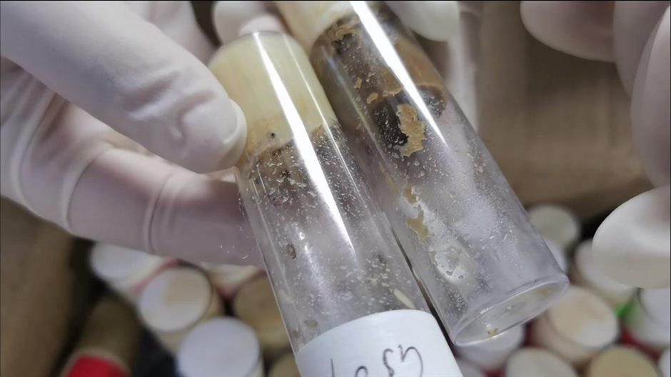 Customs officers seize flies in test tubes