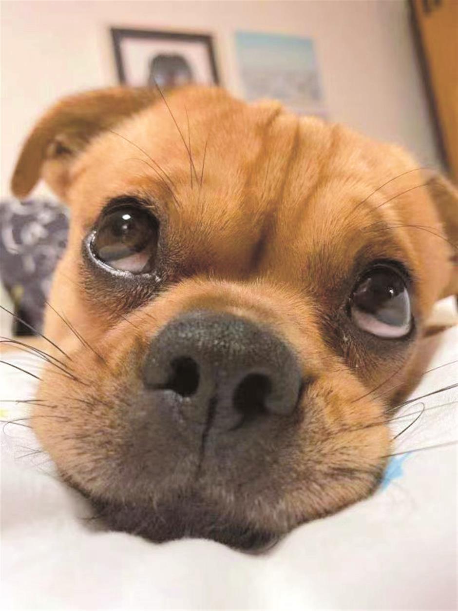 Animal adoption as of July 1