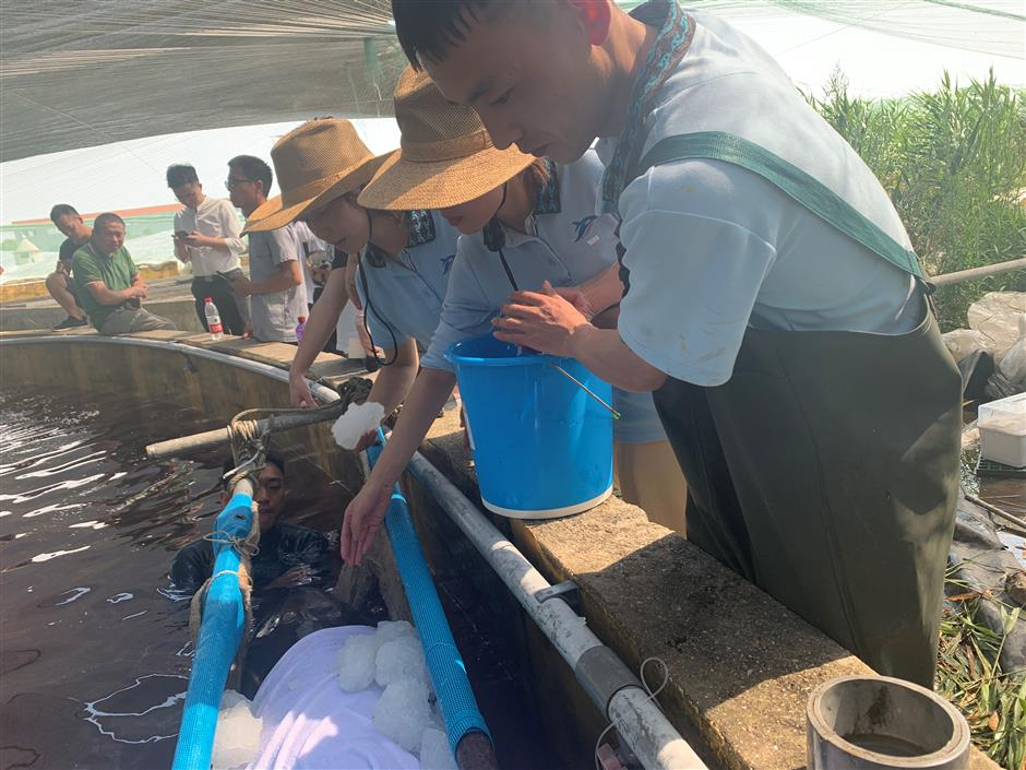 Six stranded whales in Zhejiang rescued and released