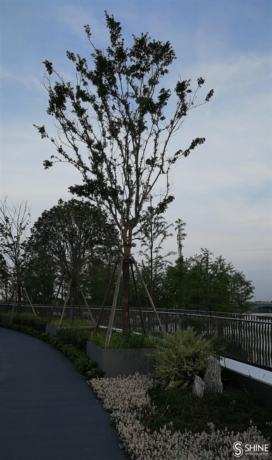 Pedestrian bridge a source of life for nature and people