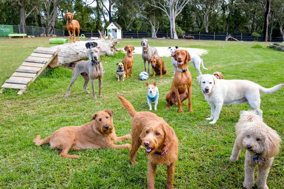 Pet fair will offer dog training and animal adoption classes this weekend