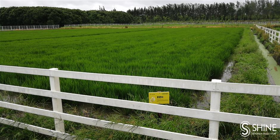 Precautions in place to ensure farm crops survive