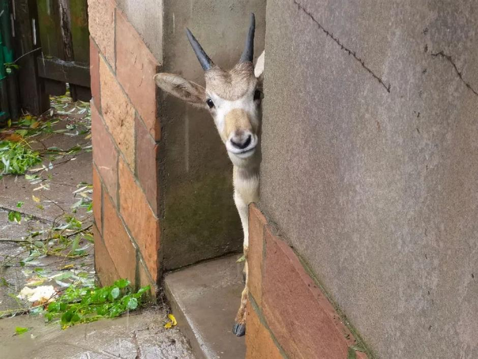 Zoo animals all safe amid Typhoon In-Fa in Shanghai